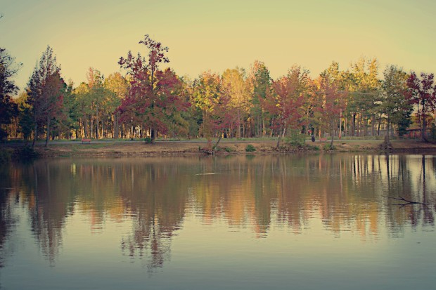 Photo Inspiration|Autumn Leaves