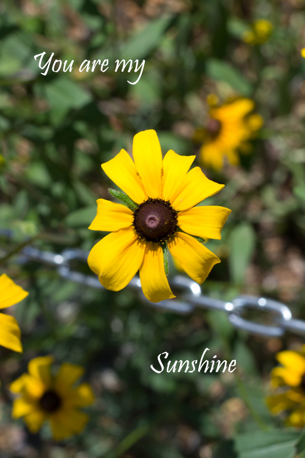 31 Stories ~ Color| You Are My Sunshine